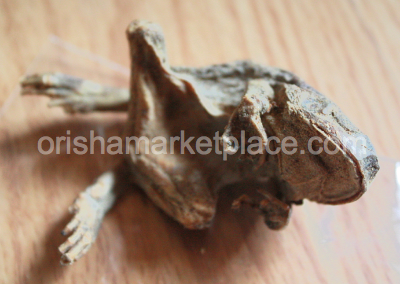 Opolo Dried Frog - Click Image to Close